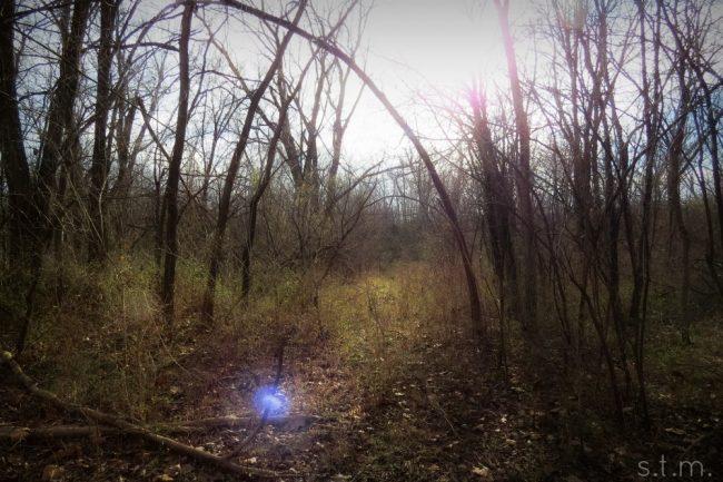three-acre wood
