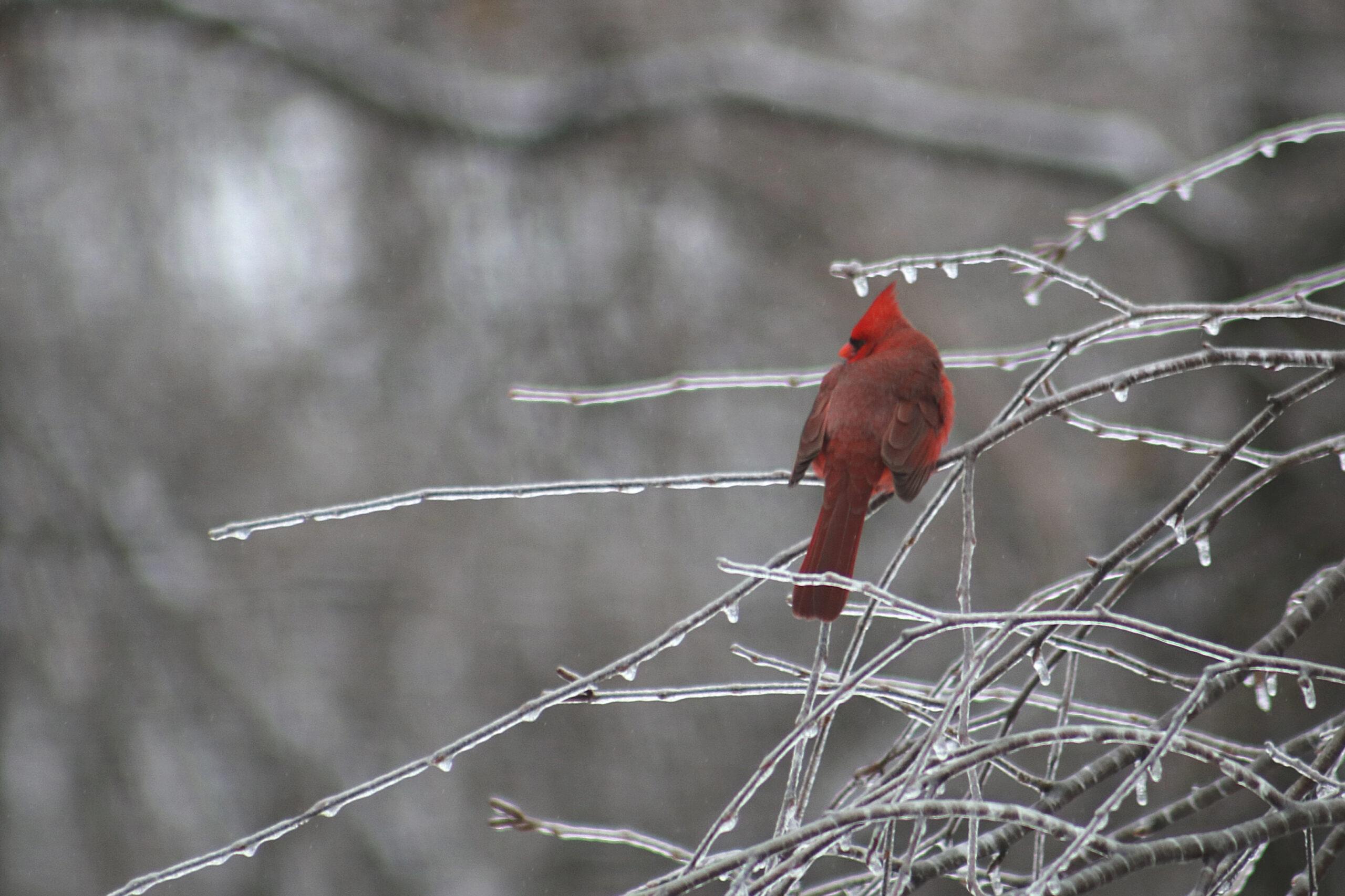 CardinalInTree